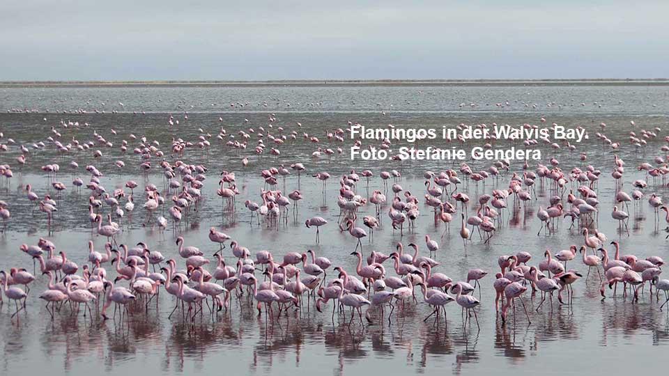 Flamingos in der Walvis Bay. Foto: Stefanie Gendera