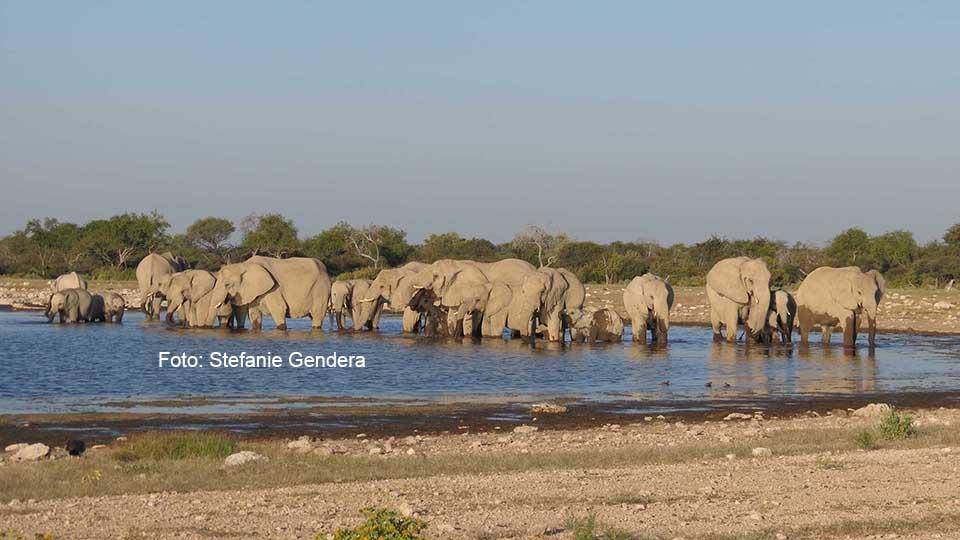 Elefanten an der Tränke / Foto: Ingo Paszkowsky