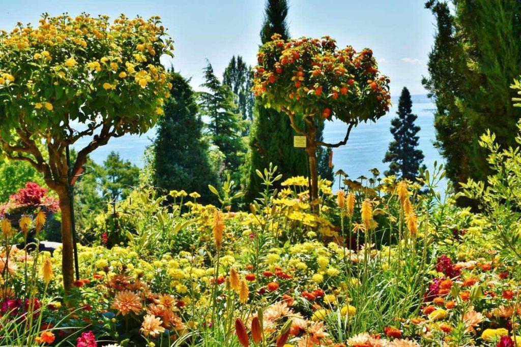 Blumenpracht auf der Insel Mainau im Bodensee / Foto: pixabay / RitaE