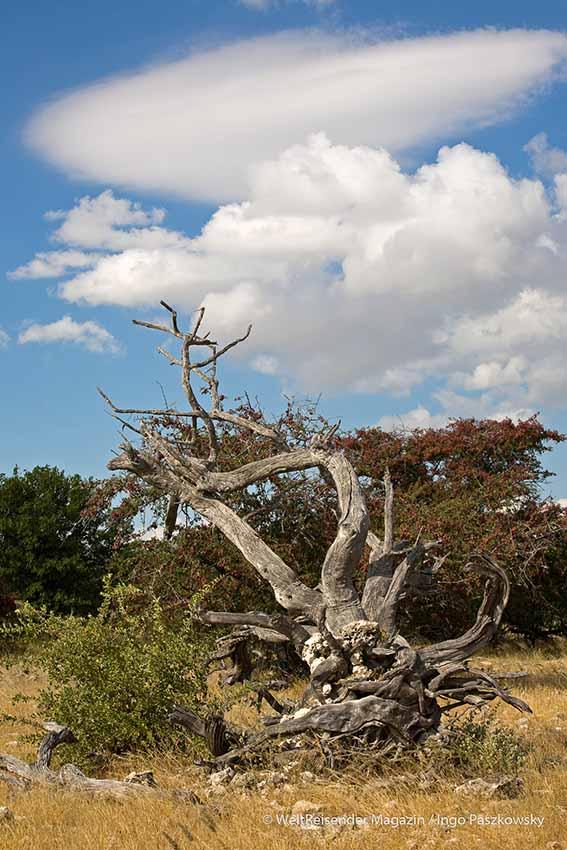 Romantische Stimmung im Etosha Nationalpark. / Foto: Ingo Paszkowsky