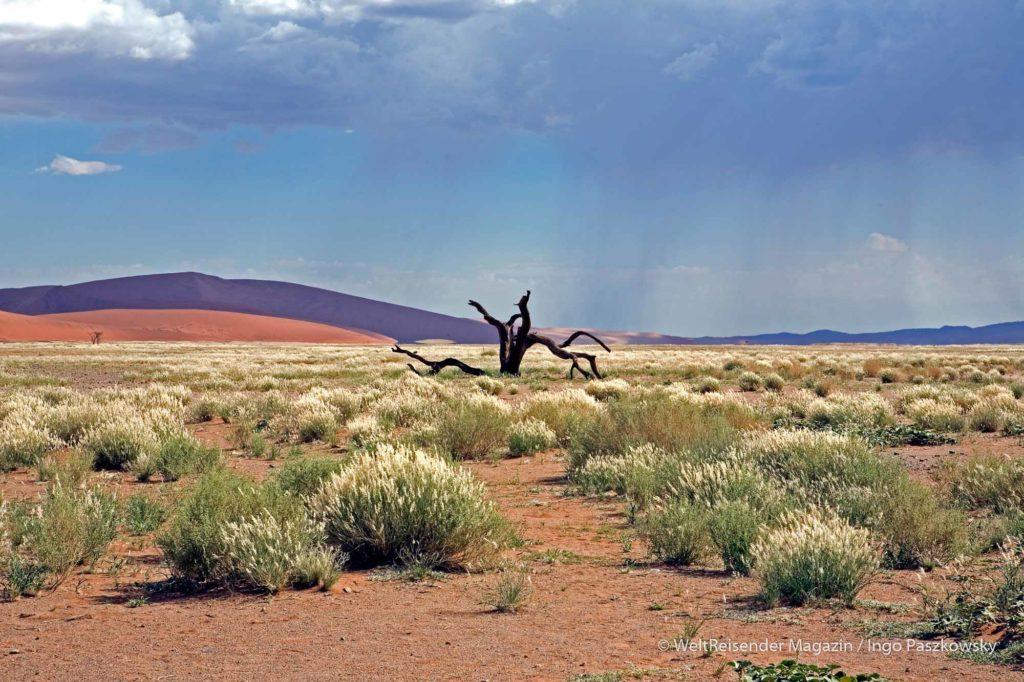 Stimmungsvolle Landschaft im Namib Naukluft Park / Foto: Ingo Paszkowsky