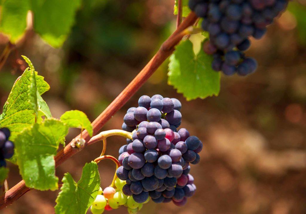 Tauchen Sie ein in die Geschichte der Burgund- und Jura-Weine / Foto: Alain DOIRE / Bourgogne-Franche-Comté Tourisme