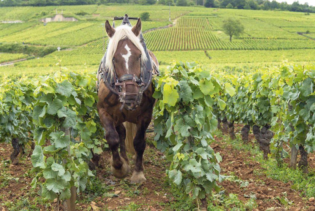 Foto: Alain DOIRE / Bourgogne-Franche-Comté Tourisme