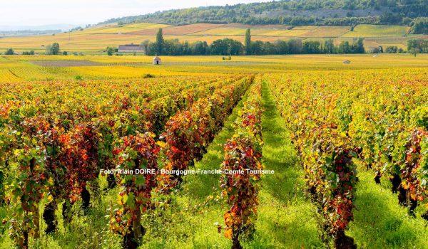 Weinberg in der Côte de Beaune / Foto: Alain DOIRE / Bourgogne-Franche-Comté Tourisme